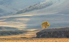 Eenzame boom in de zon Royalty-vrije Stock Afbeeldingen