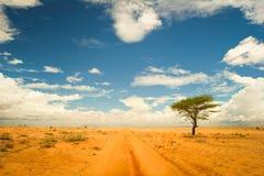 Eenzame boom in deser Royalty-vrije Stock Afbeelding