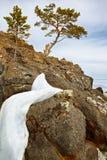 Eenzame boom dichtbij het meer van Baikal Royalty-vrije Stock Fotografie