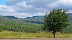 Eenzame boom die de bergketen overzien Royalty-vrije Stock Afbeelding