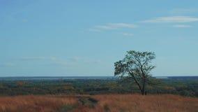 Eenzame boom die de kleuren van de herfst, timelapse van hemel tonen de wolken stock video