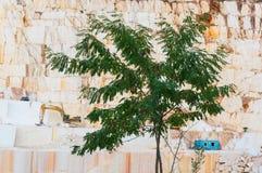 Eenzame boom die zich dichtbij marmeren steengroeve bevinden royalty-vrije stock afbeelding
