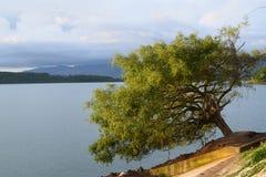 Eenzame boom die zijdelings leunen Stock Foto's