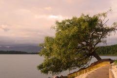 Eenzame boom die zijdelings leunen Royalty-vrije Stock Afbeeldingen