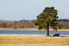 Eenzame boom door rivier Royalty-vrije Stock Fotografie