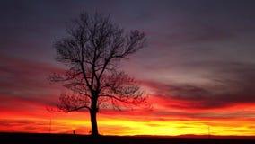 Eenzame boom in dramatische zonsondergang, Centraal Boheems Hoogland, Tsjechisch R stock videobeelden