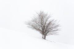 Eenzame boom in een de winter mistige dag Royalty-vrije Stock Afbeelding