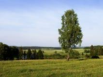 Eenzame boom. Een landschap. Royalty-vrije Stock Foto's