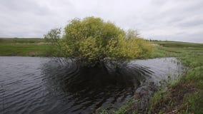 Eenzame boom in een moeras in de wind in bewolkt weer stock videobeelden