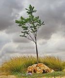 Eenzame boom in een park vóór een onweersbui royalty-vrije stock foto's