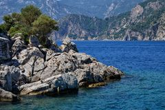 Eenzame boom in een rots door het overzees stock foto's