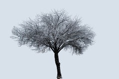 Eenzame Boom in een Sneeuwonweer Stock Afbeeldingen