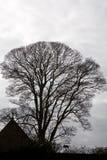 Eenzame boom en een dak van huis Royalty-vrije Stock Afbeelding