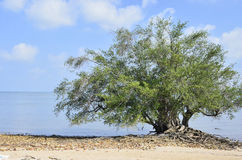 Eenzame boom en overzees royalty-vrije stock afbeeldingen