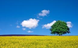 Eenzame boom en verkrachtingsgebieden Royalty-vrije Stock Foto's