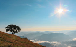 Eenzame boom en zonneschijn Royalty-vrije Stock Afbeeldingen