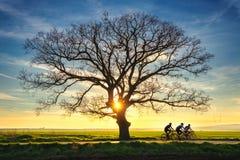 Eenzame boom en zonsondergang Royalty-vrije Stock Afbeeldingen