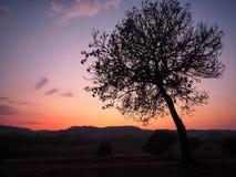 Eenzame boom en zonsondergang Stock Fotografie