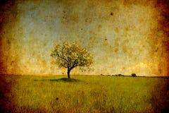 Eenzame boom grunge textuur Stock Afbeeldingen