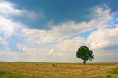 Eenzame boom in het landschap Royalty-vrije Stock Afbeelding