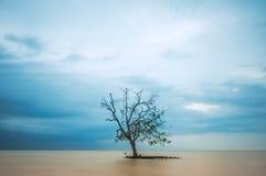 Eenzame Boom in het midden van de oceaan, lange blootstelling Stock Foto's