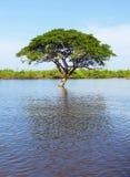 Eenzame boom in het water Stock Foto