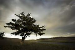 Eenzame boom in hoge bergweide Stock Afbeelding