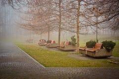 Eenzame boom in IOR-Park Stock Foto's