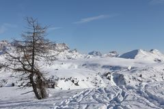 Eenzame boom, Italiaanse Dolomiti Stock Fotografie