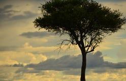 Eenzame Boom in Kenia Royalty-vrije Stock Foto's