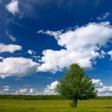 Eenzame boom in landelijk landschap Stock Foto