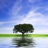 Eenzame boom in landelijk landschap met waterreflex Royalty-vrije Stock Foto's