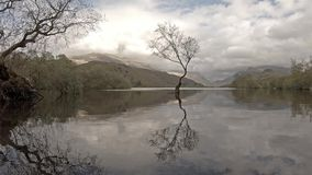 Eenzame Boom in Llanberis, het Nationale Park van Snowdonia - Wales, het Verenigd Koninkrijk stock videobeelden