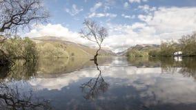 Eenzame Boom in Llanberis, het Nationale Park van Snowdonia - Wales, het Verenigd Koninkrijk stock footage