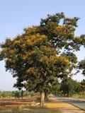 Eenzame boom met gele bloemen op een zonnige hete dag royalty-vrije stock afbeeldingen