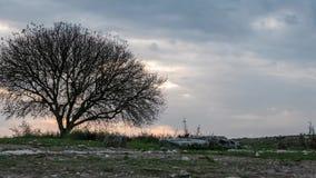 Eenzame boom met het naderen van onweerswolken Tijd stock footage