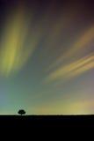 Eenzame boom met kleurrijke hemel Stock Afbeeldingen