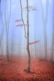 Eenzame boom met rode bladeren in mistig bos Royalty-vrije Stock Foto's