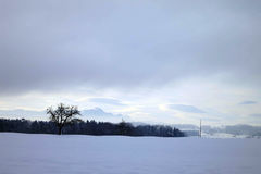 Eenzame boom met vogel in de sneeuw Stock Foto's