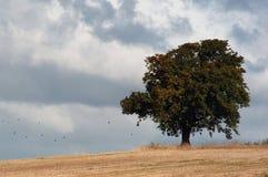 Eenzame boom in onweer Royalty-vrije Stock Afbeeldingen