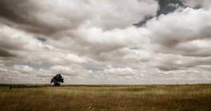 Eenzame boom in Oostelijke Vlaktes Colorado stock videobeelden
