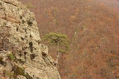 Eenzame boom op achtergrond van bergen stock foto's