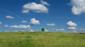 Eenzame boom op blauwe hemel en wolkenachtergrond stock videobeelden