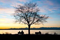 Eenzame boom op de baaikust Stock Foto's