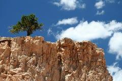 Eenzame Boom op de Bovenkant van de Berg Royalty-vrije Stock Foto
