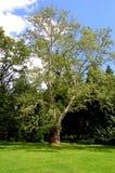 Eenzame boom op de grens van de parkopheldering Royalty-vrije Stock Afbeeldingen