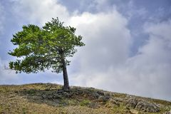 Eenzame boom op de helling amid de wolken en de hemel stock afbeelding