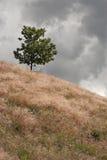 Eenzame Boom op de Heuvel Royalty-vrije Stock Afbeelding