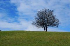 Eenzame boom op de heuvel Stock Afbeelding