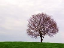 eenzame boom op de horizon stock afbeelding